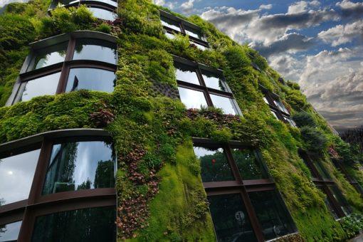 Les plantes appropriées pour un mur végétal